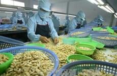Le Vietnam vise 4 milliards de dollars d'exportation de noix de cajou en 2020