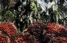 L'Inde réduit ses droits de douane sur l'huile de palme raffinée en provenance de l'ASEAN