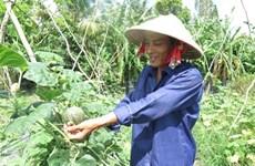 Hô Chi Minh-Ville compte 40 nouvelles entreprises agricoles