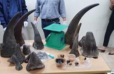 Hanoi : Un transporteur de cornes de rhinocéros condamné à 5 ans de prison