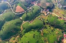 Vers le développement durable de la théiculture de Phu Tho