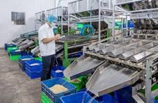 La filière de la noix de cajou abaisse sa valeur d'exportations à 3,2 milliards de dollars