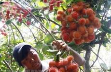 Les experts américains de la quarantaine végétale arriveront au Vietnam le 2 septembre
