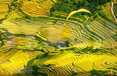 Mù Cang Chai: la « mer jaune » pittoresque au Nord-Ouest