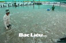 Bac Liêu compte porter à 60.000 ha le modèle de pénéiculture en association avec le riz