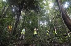 Cambodge: Quelque 25 millions de dollars générés par l'écotourisme au cours des neuf premiers mois