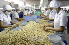 Le Vietnam s'efforce de demeurer « le roi de la noix de cajou » du monde