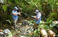 Le Vietnam appelle l'ONU à promouvoir la paix, la sécurité et le développement en Colombie