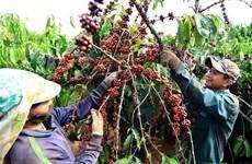 L'Afrique du Sud reste le principal partenaire commercial du Vietnam en Afrique