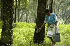 La Thaïlande, l'Indonésie et la Malaisie vont réduire leurs exportations de caoutchouc