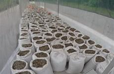 Singapour saisit une grande quantité d'écailles de pangolin