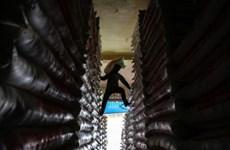 Bond des exportations de riz cambodgien vers la Chine