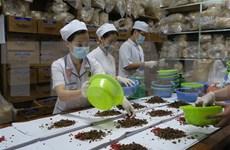 Le Vietnam et la R. de Corée coopèrent dans la recherche en médecine traditionnelle