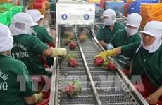Tien Giang : le chiffre d'affaires à l'exportation atteint 2,7 milliards de dollars