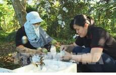 Tien Giang veut exporter 400 tonnes de pommes de lait vers les États-Unis
