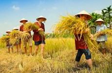 Ho Chi Minh-Ville : développer l'agrotourisme dans les districts périurbains