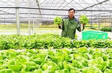 Exportation de légumes hydroponiques de Da Lat vers la République de Corée