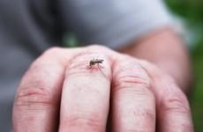Plus de 650 cas de dengue signalés à Singapour la semaine dernière
