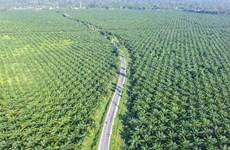 L'Indonésie demande à certains supermarchés d'éliminer les produits «sans huile de palme»