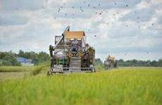Thaïlande : approbation d'un budget pour garantir les prix du riz et de l'huile de palme