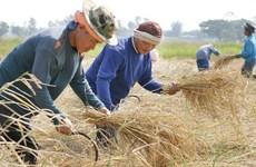 Thaïlande: le système de garantie des prix du riz sera mis en œuvre en octobre