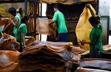 La Thaïlande devient le premier exportateur mondial de caoutchouc