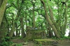 """""""Patrimoine végétal"""" en terre sainte à Phu Tho"""