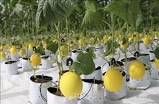 Ninh Thuan promeut l'application des sciences et technologies dans la production agricole