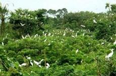 Le jardin des oiseaux de la ville de Ca Mau