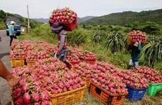 Vietnam-Chine: le commerce bilatéral établit un record