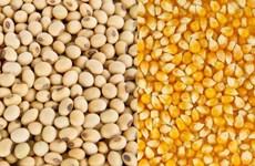 Matières premières de l'alimentation animale: l'Argentine, premier fournisseur du Vietnam