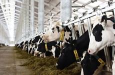 Le Vietnam exportera son premier lot de lait en Chine en octobre