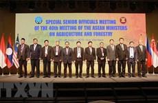 Ouverture de la réunion des hauts officiels du secteur agro-sylvicole de l'ASEAN