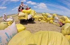 Les exportations de riz à l'étranger en hausse