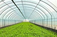 Hanoi : déploiement réussi du modèle du légume bio