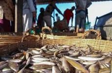 Les exportations de produits aquatiques du Cambodge reculent de plus de 84%