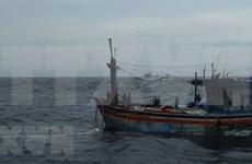 Trois pêcheurs de Binh Dinh à la dérive en mer sauvés