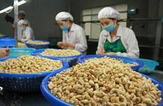 La filière de la noix de cajou cible 4 milliards d'USD d'exportation en 2021