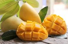 Le Vietnam vise 650 millions de dollars d'exportations de mangues d'ici 2030