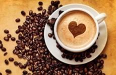 Le café, premier produit vietnamien d'exportation vers l'Algérie