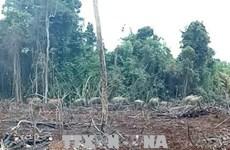 Dong Nai: les gardes-forestiers travaillent pour surveiller les éléphants affamés