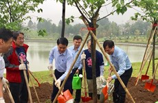 Plantation de 1.000 cerisiers du Japon dans le parc Hoa Binh à Hanoï