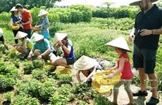 Promotion de l'agrotourisme à Ho Chi Minh-Ville