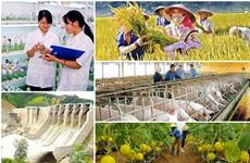 L'agriculture continue de croître malgré la peste porcine africaine