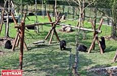 Centre de sauvetage des ours de Tam Dao, dans la province de Vinh Phuc