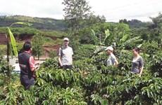 Quand tourisme rime avec agriculture au Tây Nguyên