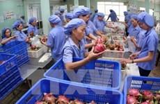 Fruits et légumes : les exportations atteignent 3,5 milliards de dollars en onze mois