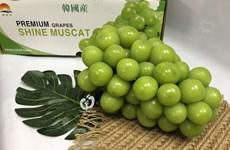 Le Vietnam est le plus grand marché d'importation de raisins sud-coréens