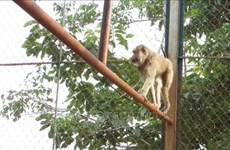 25 animaux sauvages libérés dans le parc national Bu Gia Map