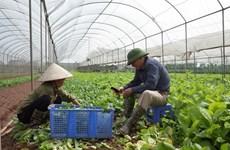Promouvoir la croissance de l'agriculture de Hanoï